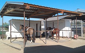 two horses in cross-ties under roof, with tack closets in the background